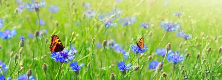 Photo pour Macro shot on two butterflies and flowers. - image libre de droit