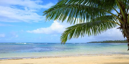 Photo for Palm tree on white tropical beach. Travel background. - Royalty Free Image