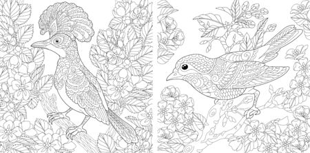 Illustration for Adult coloring pages. Beautiful birds in the spring garden. Line art design for antistress colouring book in zentangle style. Vector illustration.  - Royalty Free Image