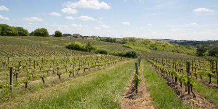 beautiful landscape on the vines near Bordeaux in France