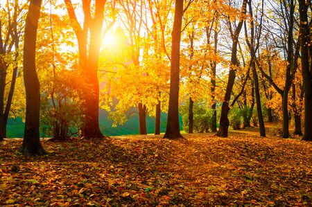 Photo for Autumn sunny landscape. Autumn park trees and fallen autumn leaves on the ground in the park in sunny October day - Royalty Free Image
