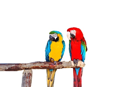 Two parrots sitting on the wood tube