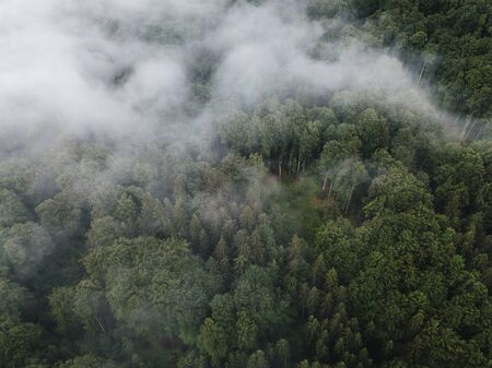 Photo for Scenic view of foggy green wilderness forest from above - Royalty Free Image
