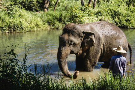 Photo pour Elephant in thailand jungle. Wild animal in natural enviroment. Sunny day exotic landscape. - image libre de droit