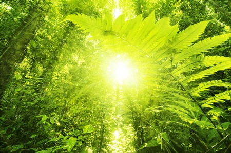 Sun shining into tropical forest, low angle view.