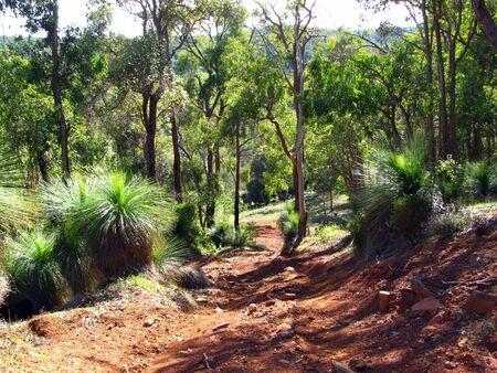 australian forest native bushland