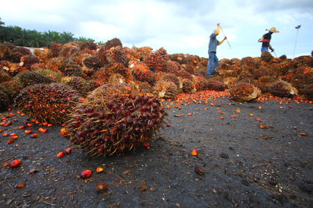 Oil palm industry workers in background