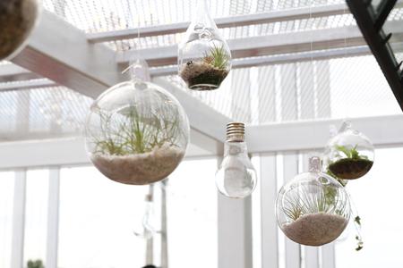 Foto de Hanging terrariums with plant in indoor environment - Imagen libre de derechos