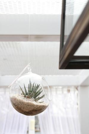 Terrarium with Haworthia plant used as hanging indoor decoration