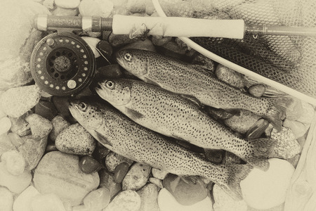 Photo pour Three wild trout with fishing fly reel, landing net and assorted flies on wet river bed stones with vintage concept. - image libre de droit