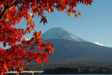 Photo pour Japanese red maple leaves in autumn - image libre de droit