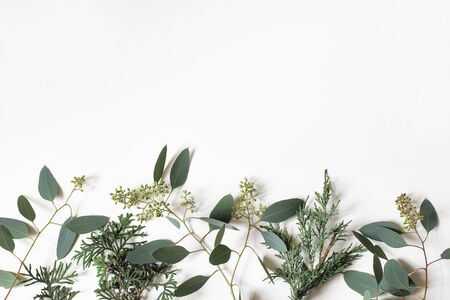 Foto de Christmas floral frame, web banner. Border of green cypress, juniperus and berry eucalyptus tree branches isolated on white table background. Winter natural decoration.Botanical flat lay, top view. - Imagen libre de derechos