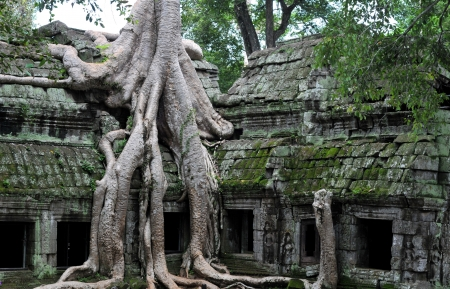 the hidden jungle temple ta prohm near angkor wat in siem reap,cambodia is one of the most fascinating places on planet earth