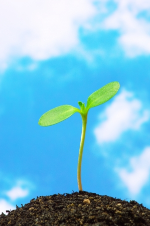 Foto de Sunflower sprout on blue sky background  vertical  - Imagen libre de derechos