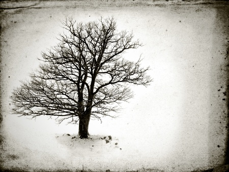 Photo pour lone tree without leaves  in winter - image libre de droit
