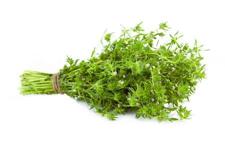 Bunch of fresh Thyme    isolated on white background