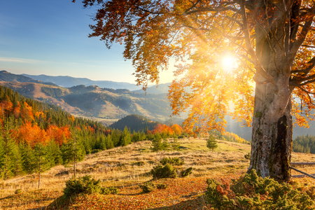 Photo pour Early Morning Autumnal Landscape - yellow old tree against the sun, mountains range - beautiful fall season - image libre de droit
