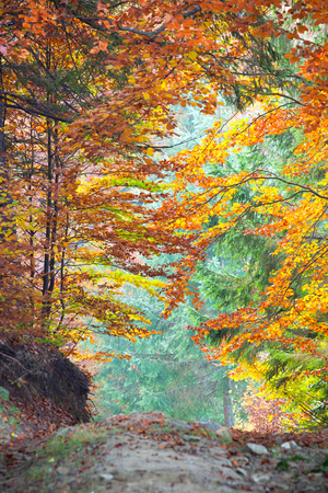 Foto per Colorful Autumn Fall Leaves in forest landscape and footpath, vertical - Immagine Royalty Free