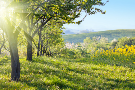 Photo pour Sunny Countryside landscape at the morning  -  Flowering trees, green grass and beautiful valley panorama, spring - image libre de droit