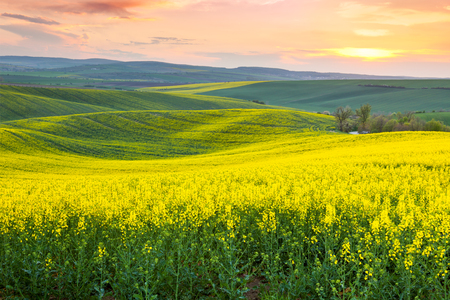 Foto de Spring fresh landscape of colorful fields,  sunrise sky and beautiful hills valley - Imagen libre de derechos