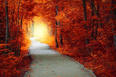 Foto de Fantastic Autumn forest with path and magical light, fall fairytale landscape - Imagen libre de derechos