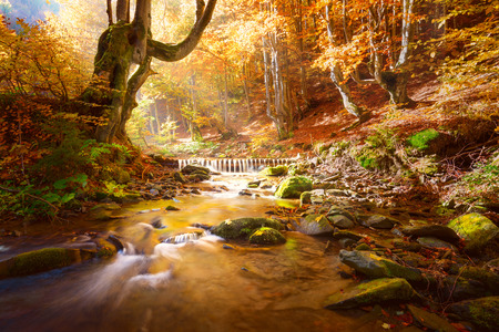 Photo for Autumn Landscape. Small mountains river in yellow trees forest, colors of fall nature, big size - Royalty Free Image