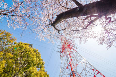 Photo for Cherry blossoms and towers in full bloom - Royalty Free Image