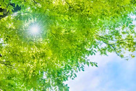 Foto de Fresh green leaves - Imagen libre de derechos