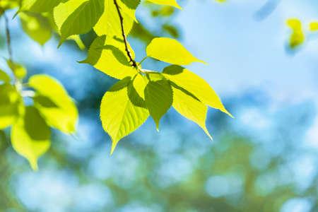Foto de Fresh green trees in spring with vivid colors - Imagen libre de derechos