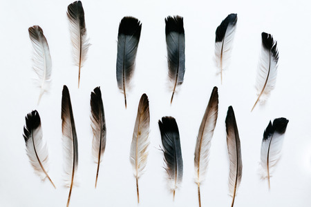 Feathers of the bird on white
