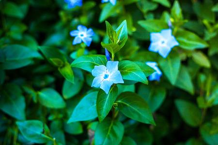 Blueflowers on a rainy day. Portugal