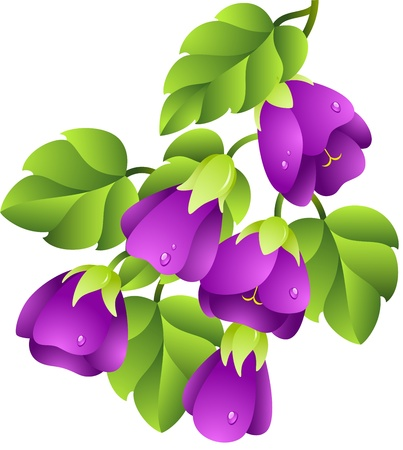 Beautiful illustration of a lilac flowers, isolated