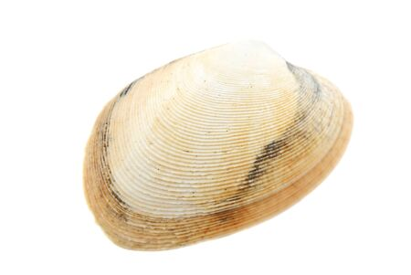 Photo pour Beautiful seashell isolated on white background close-up - image libre de droit
