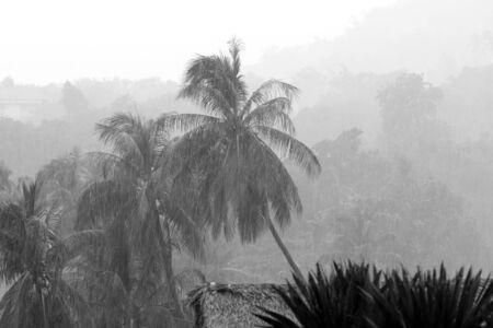 Foto de Heavy tropical rain on the coast of Koh Samui, Thailand. Black and white - Imagen libre de derechos