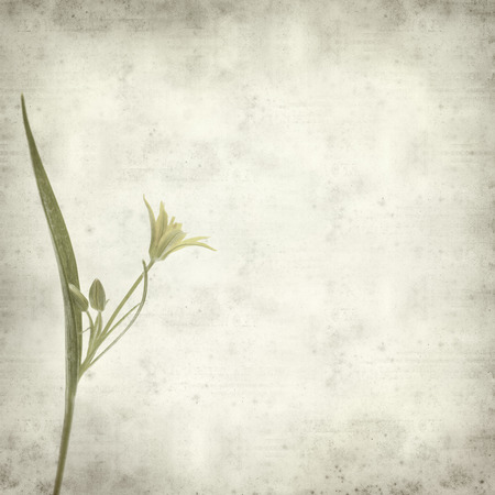 textured old paper background with gagea flower