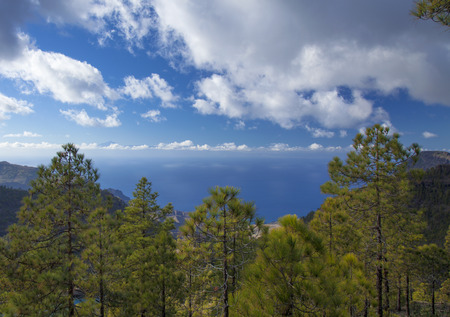 central Gran Canaria,  Nature Park Tamadaba, , canarian Pine trees on the slopes, Teide on Tenerife visible over clouds