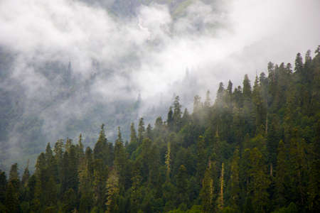 Photo pour Wonderful and amazing landscape, foggy and misty mountain view in Svaneti, Georgia. Summer in Georgia. - image libre de droit