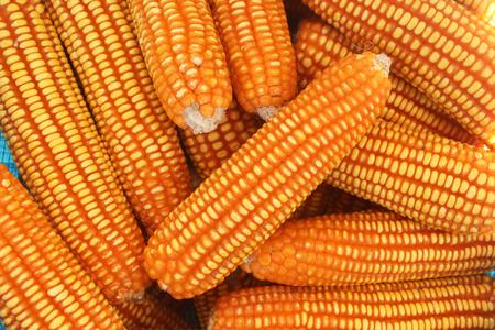Foto für Closed up sweet corn, top view. - Lizenzfreies Bild