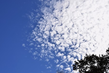 Autumn spectacle / Blue sky and white clouds