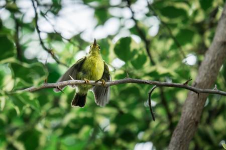 Photo pour bird - image libre de droit