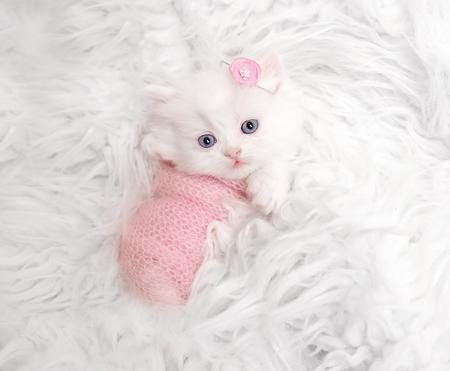 Photo pour newborn Scottish kitten on white fur - image libre de droit