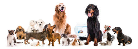 Photo pour Collage of pets isolated on white background - image libre de droit