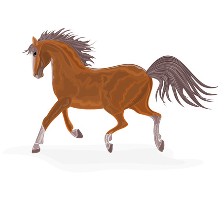 Brown horse   without gradients
