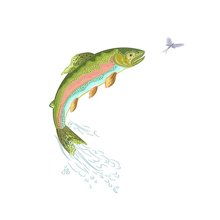 American trout jumps ilustration without gradients