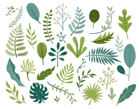 Vektor für Set of different tropical and other isolated green leaves. Palm, banana leaf, hibiscus, plumeria, split leaf, philodendron. Jungle collection for your design.Vector illustration. - Lizenzfreies Bild