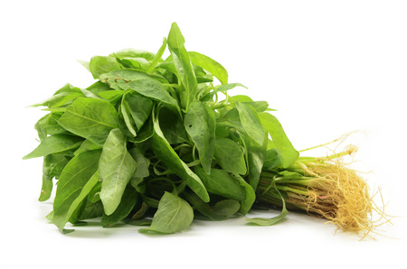 Photo pour Fresh Chinese spinach isolated on the white background. - image libre de droit