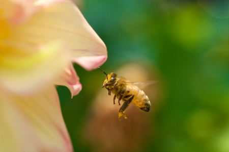 Macro shot of a bee on a flower with faded background.