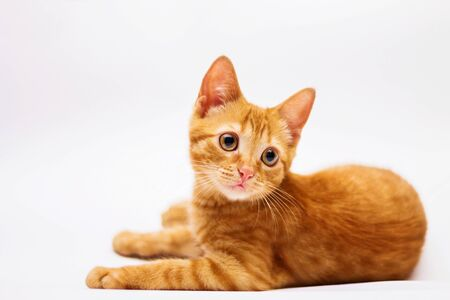 Photo for a handsome, cute, red, a small kitten lies on a white backdrop of c large eyes - Royalty Free Image
