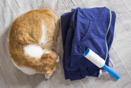 Cat shedding, lint remover and blue clothes full of animal's hair.