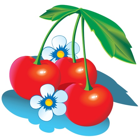 Cherry with green leaves. Vector illustration on a white background.